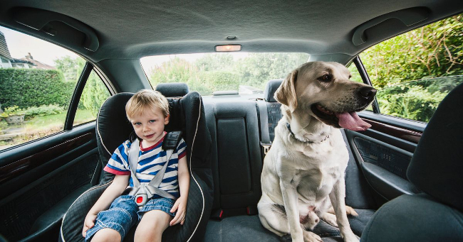 Dog-and-child-in-car